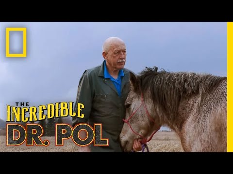 The Incredible Dr. Pol - Horse Castration video