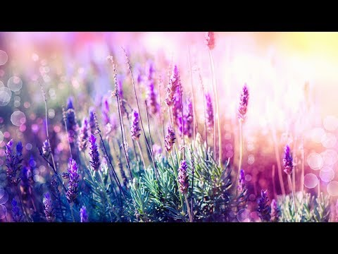 Relaxing Music for Stress Relief. Soothing Music for Meditation, Healing Therapy, Sleep, Spa