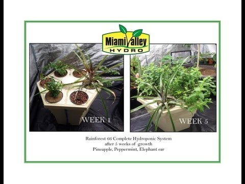 Miami Valley Hydro Suggests GH's Rainforest 66 Hydroponic System