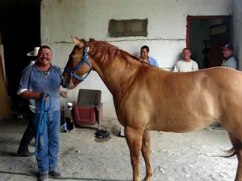 Abel cayendose del caballo