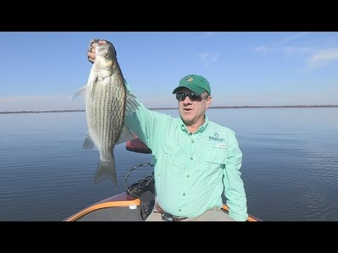 Southwest Outdoors Report #38 Lake Tawakoni, Texas White Bass & Hybrid Striper Fishing - 2013