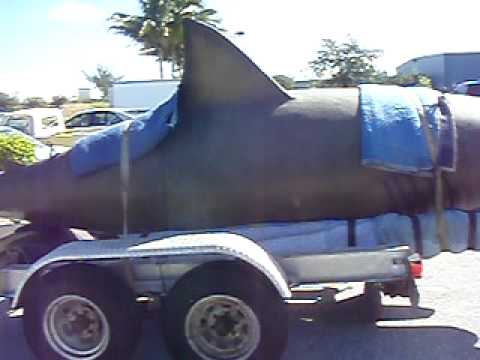 Megalodon Caught http://www.vxv.com/video/ylaDMnupmSeb/megalodon-the-largest-shark-ever.html