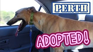 Perth Vlog: Adopting a dog!!