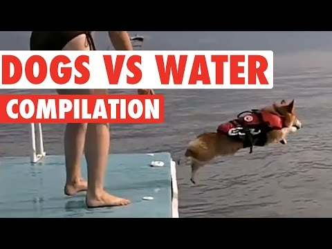 Amazing Dog vs Water Puppy Pet Video Compilation 2016