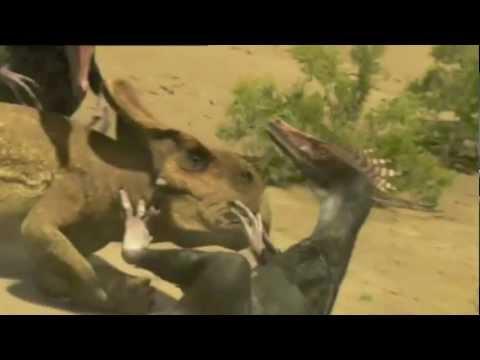 a epic battle of velociraptor vs protoceratops youtube