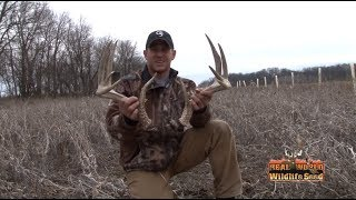 Whitetail Sheds & Deads 2013