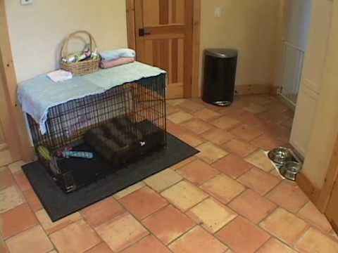 Perfect Puppy Setup Youtube