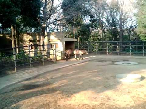 動物園 (20090112150402.3gp)