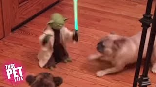 Animals are Awesome!   100 Funny Pet Videos