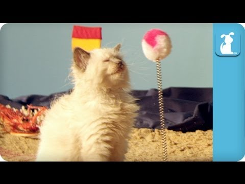 Precious Kittens Playing On The Beach - Cats At Play