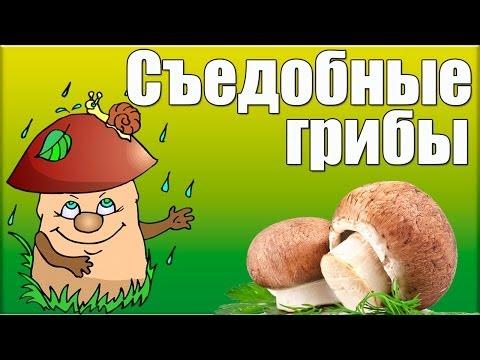 Видеоурок Грибы - видео