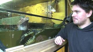 The Man Who Keeps Crocodiles in his back Garden.mov