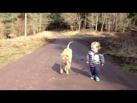Very Funny Cute Baby Takes Dog For A Walk Kind F 252 Hrt