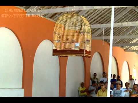 CURIÓ MILIONÁRIO - 4º Torneio Alagoano de Canto Curió