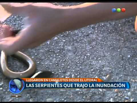Serpientes en la costa de Quilmes - Telefe Noticias