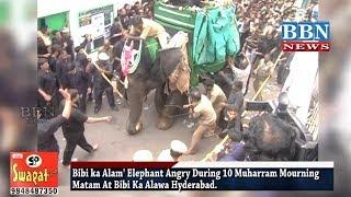 Bibi ka Alam' Elephant Angry During 10 Muharram Mourning Matam At Bibi Ka Alawa Hyderabad | BBN NEWS