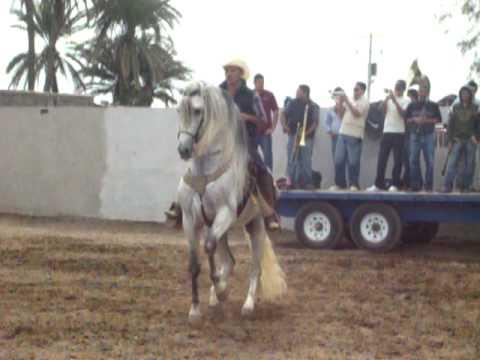 caballo bailador en cocorit sonora