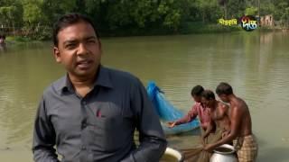 Deepto Krishi/দীপ্ত কৃষি - ধান ও মাছ চাষ/নওগাঁ, পর্ব ১২৮