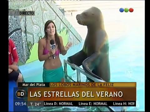 Los lobos marinos, protagonistas en Mar del Plata - Telefe Noticias