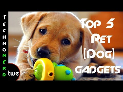 5 Best Pet Gadgets you should buy