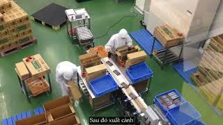 Xuất khẩu lao động Nhật Bản thương binh và xã hội