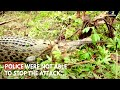 Mob Kills 300 Crocodiles In Revenge Attack