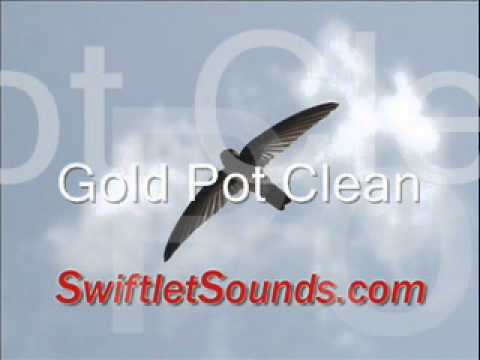 Swiftlet Sound - Gold Pot Clean External Sound video