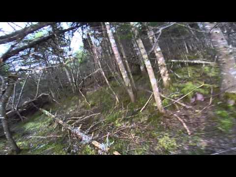 Rabbit Hunting - Maddox Cove 22 November 2014 First Rabbit