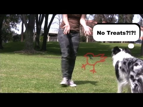 0 dispelling myths on dog training