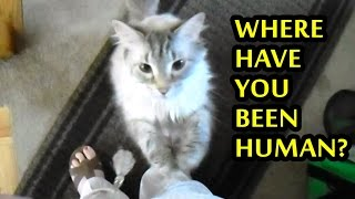 Cats Welcoming Owners Home Compilation 2015 [NEW]