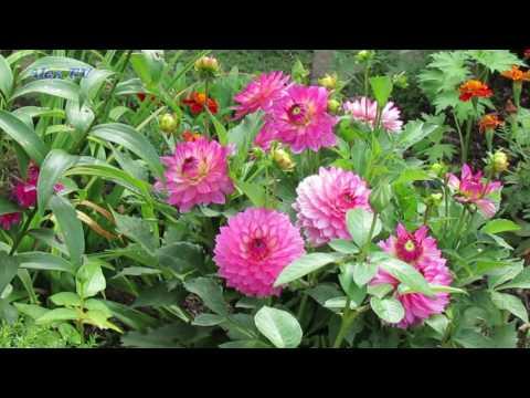 Blumen Garten im Hochsommer 2017