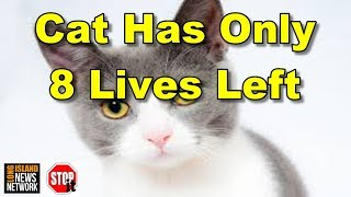 Cat Only Has 8 Lives Left!