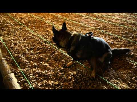 High Assurance Search Dogs På Flyvestation Karup
