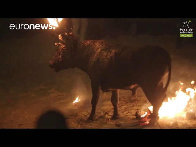 Bull set on fire at Spanish Toro Júbilo festival