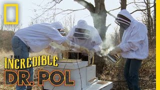 To Bee or Not to Bee | The Incredible Dr. Pol