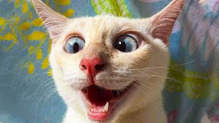 😂  Funniest 😻 Cats and 🐶 Dogs - Awesome Funny Animals' Life Videos 😇