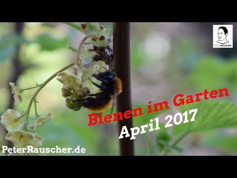 Bienen und Schmetterlinge im Garten - April 2017