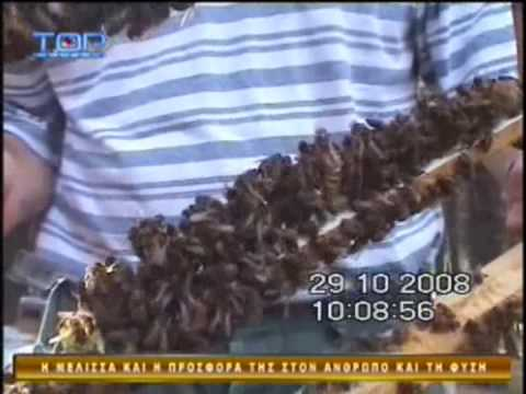 Paragogi  giris kai vasilikou poltou (pollen, royal jelly), thlefwno 6942-568856 Music Videos