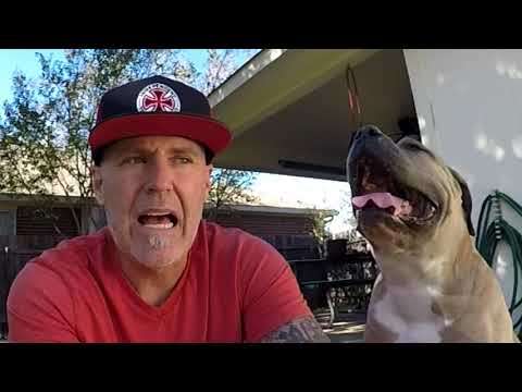 2nd day riding Gullwing pro 3 skateboard truck review.. Thanksgiving 2017
