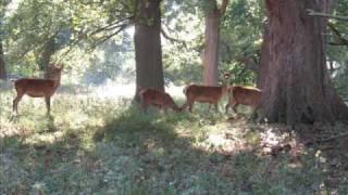 Watch Strawbs Shine On Silver Sun video