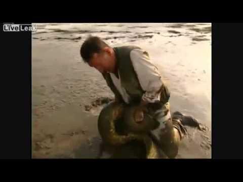 поймал змею на удочку