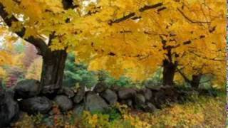 Turkish Sufi music (Autumn)