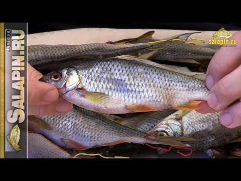 Вяленая рыба, плотва и густера (вобла, таранка) [salapinru]