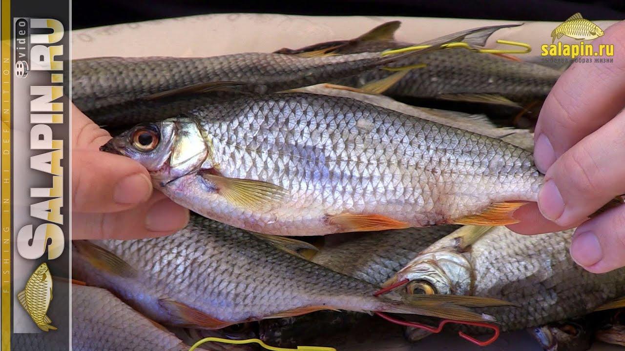 Секретные материалы домашней хозяйки. Рыбные тонкости 8
