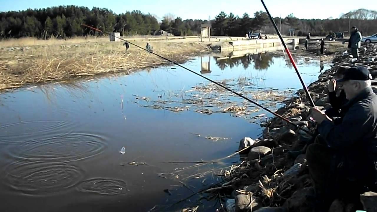 как поймать плотву весной на реке видео