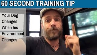 60 Second Training Tip: Your Dog Changes When his Environment Changes