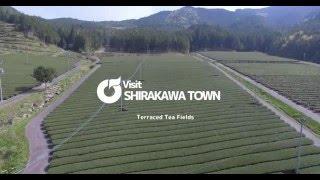VisitShirakawTown TerracedTeaFields 白川町の段々茶畑