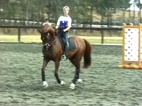 Dressage – Anky & Idool- training [Sydney]