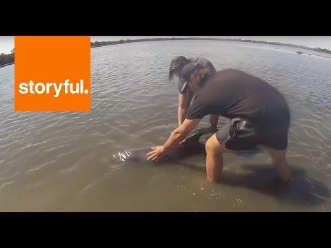 浅瀬で動けなくなった赤ちゃんイルカの救出劇