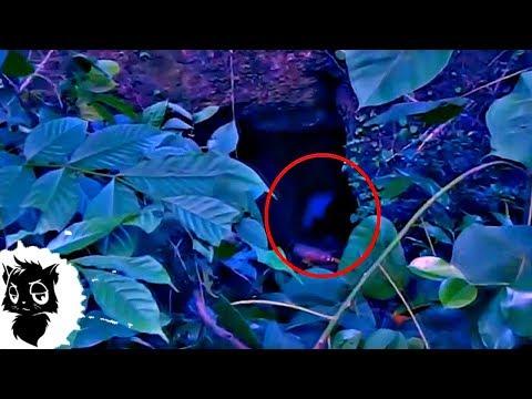 7 ЛЕСНЫХ МОНСТРОВ СНЯТЫХ НА КАМЕРУ [Черный кот]